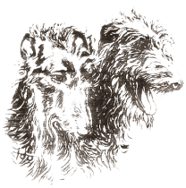 Deerhoundclub Nederland