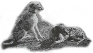 geschiedenis deerhound