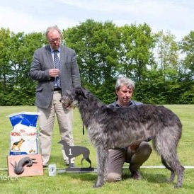 Deerhound03