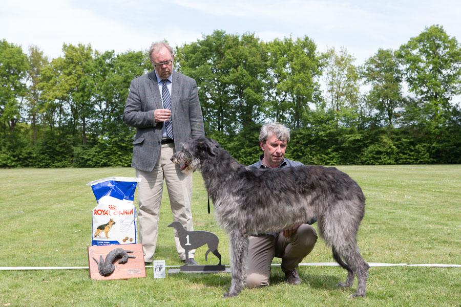 deerhound club kampioenschap 2015